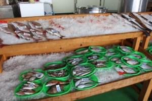 笠岡魚市場朝市