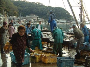 美保関漁港 大敷網の朝獲れ鮮魚市場