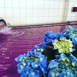 紫陽花風呂