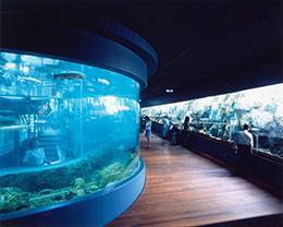 森の中の水族館。