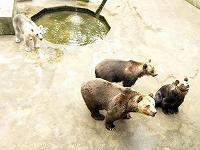芦野児童動物園
