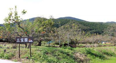 観光果樹園三宝園