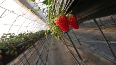 岡山フルーツ農園