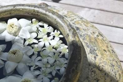 トリサラの花