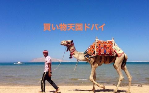 ドバイのビーチを行くラクダ