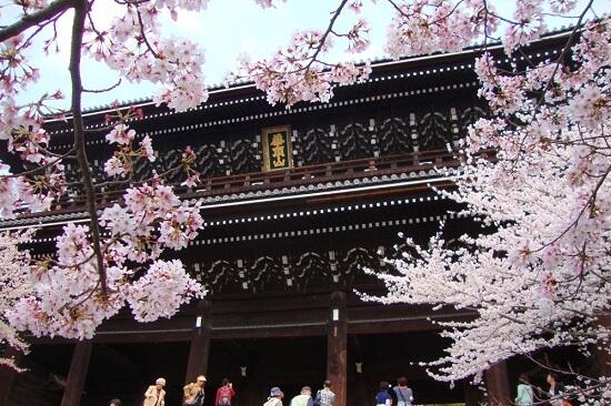 20150216-285-20-kyoto-Cherry-blossoms