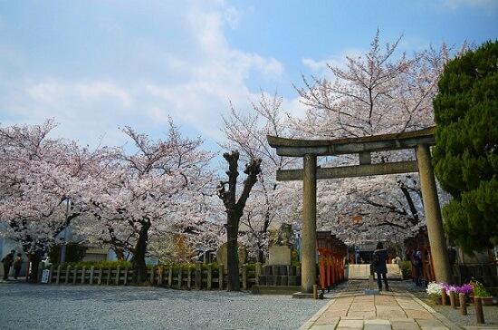 20150216-285-23-kyoto-Cherry-blossoms