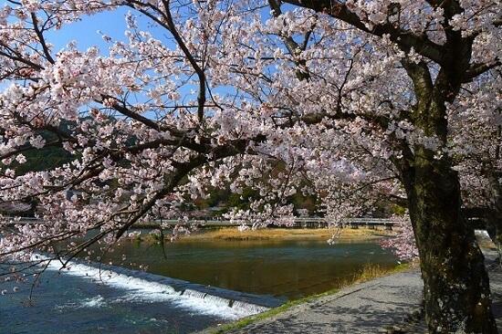 20150216-285-25-kyoto-Cherry-blossoms