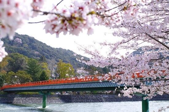 20150216-285-43-kyoto-Cherry-blossoms