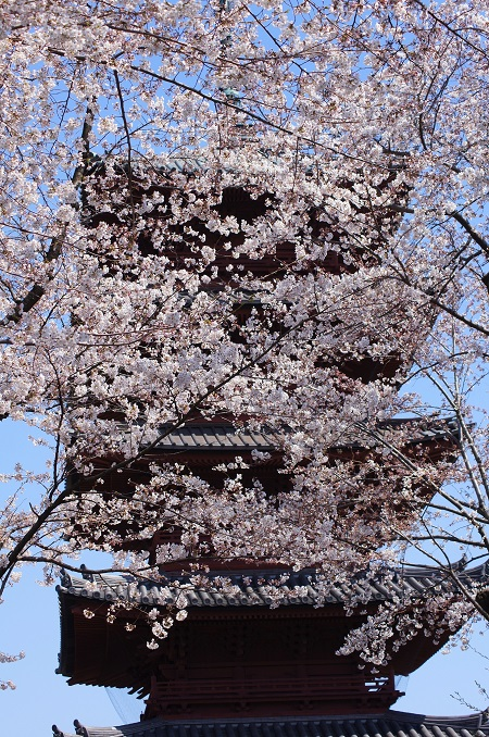 20150220-289-18-tokyo-Cherry-blossoms