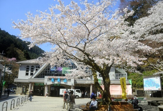 20150220-289-47-tokyo-Cherry-blossoms
