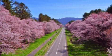 春だ!桜だ!お花見だ!今年も行きたい桜の名所【北海道・東北編】
