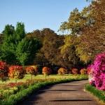 公園 自然 風景