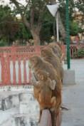 Toujorus a Jaipur, aurout du City Palace