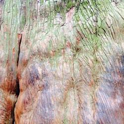 Le bois est devenu tout lisse sous les mains des passants