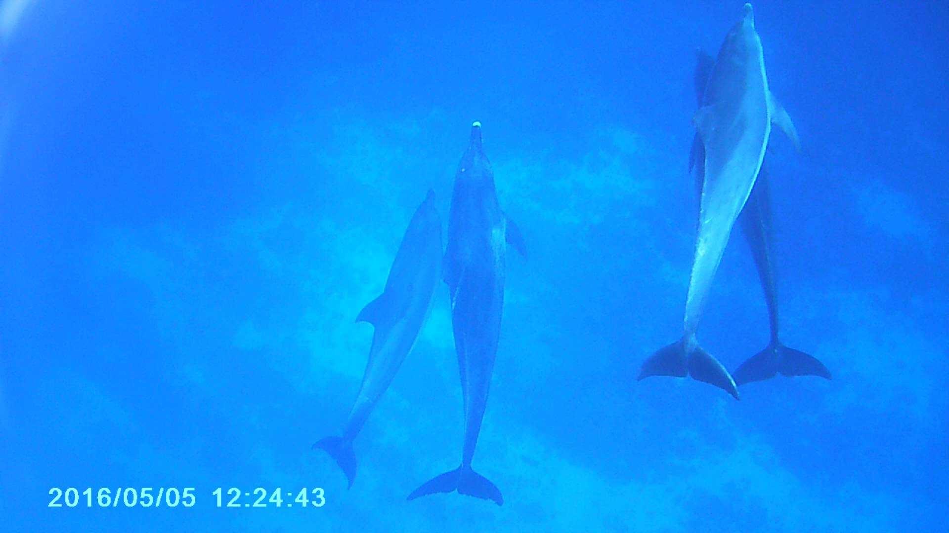 oga_dolphin8