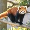 千葉市動物公園GW混雑状況レポ!駐車場とバーベキュー情報も