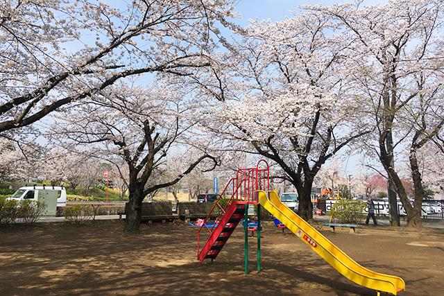 四街道中央公園はこんなとこ!イベント&お花見情報と駐車場画像あり