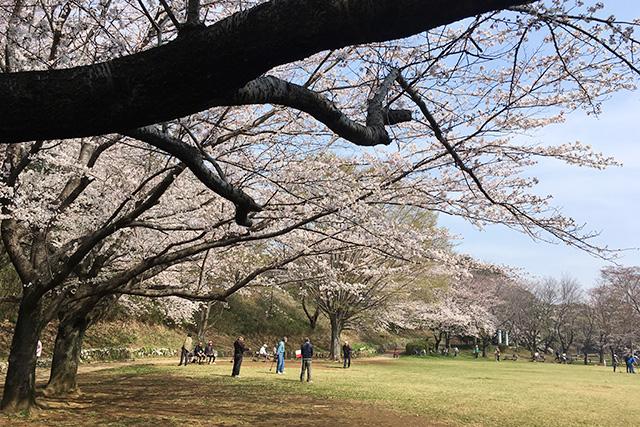 四街道の公園お花見スポット4選!駐車場あり子供も遊べるオススメな場所