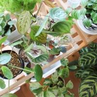観葉植物を水に挿して飾って増やそう!発根から鉢上げのポイントを解説