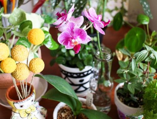 ミニ胡蝶蘭と観葉植物