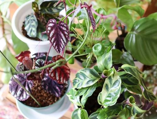 観葉植物の湿度