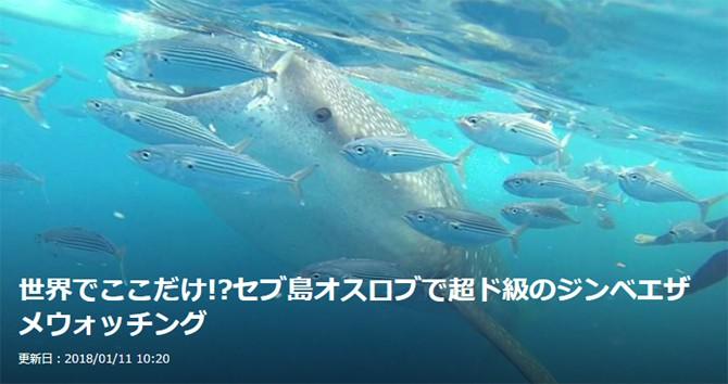 フィリピン セブ オスロブ ジンベエザメ Philippines Cebu Oslob Whaleshark