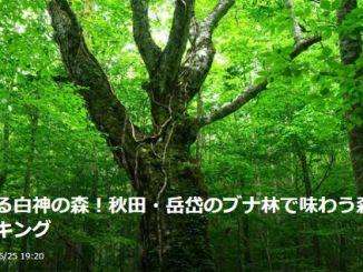 秋田県 白神山地 岳岱自然観察教育林 Akita Shirakami Sanchi Dakedai
