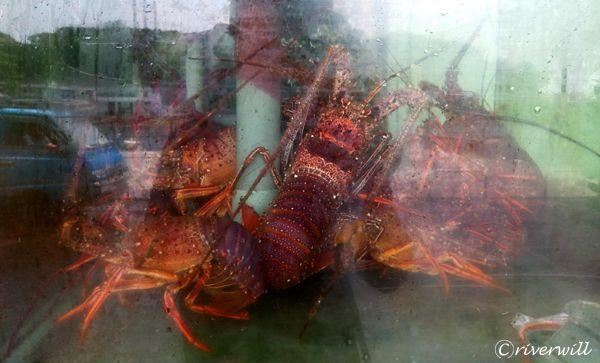 台湾 和平島 観光魚市通り Taiwan Heping Park