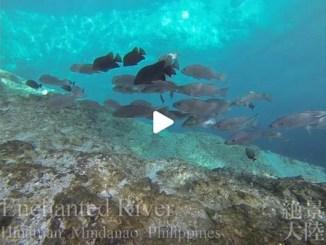 【TOP BUZZ】 フィリピン ミンダナオ島ミンダナオ島 エンチャンテッド・リバー Philippines Mindanao Enchanted River