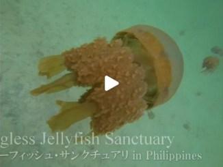 【TOP BUZZ】【絶景大陸vol.066】刺さないクラゲのサンクチュアリ!フィリピン奥地のクラゲパラダイス