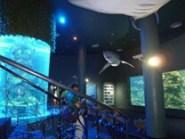 ニャチャン水族館