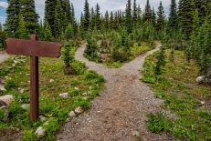 photo-of-pathway-surrounded-by-fir-trees-1578750-scaled