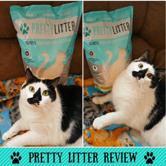 Why You Should Try Pretty Litter