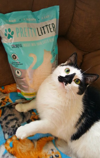 Why You Should Try Pretty Litter (Review)
