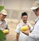 Inspektur IV Kementerian Pertanian Kepincut Melon Chimoy