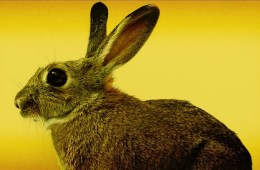 Top 10 Best Rabbit Vibrators