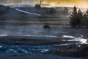 Yellowstone-3334