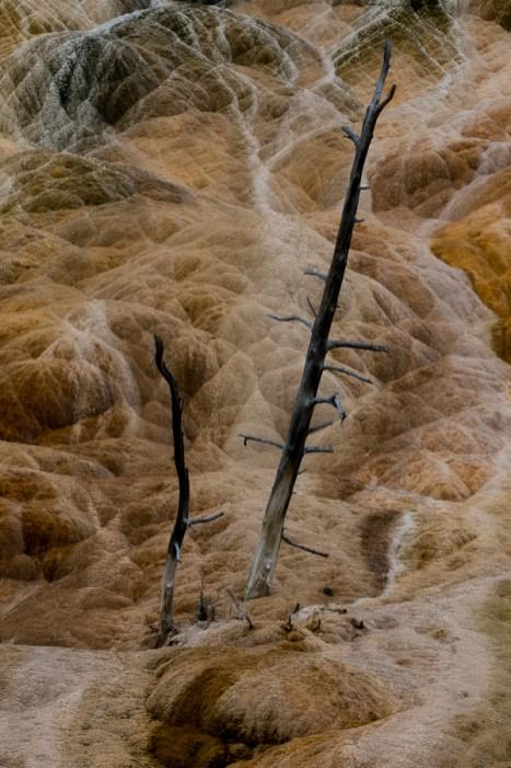 Yellowstone-3799