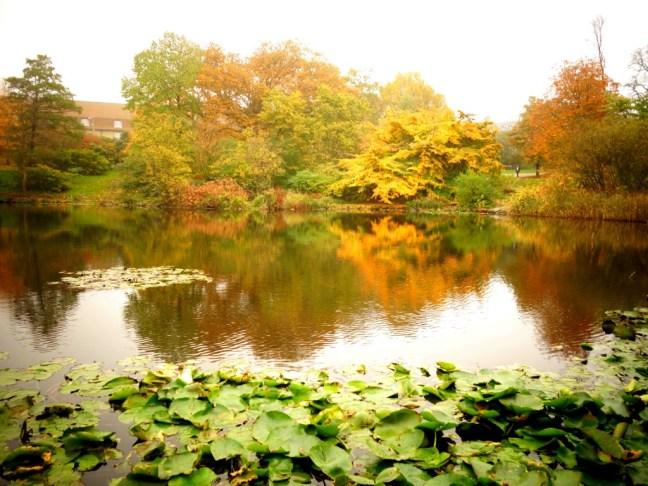 tache de rousseur blog voyage copenhague automne 2