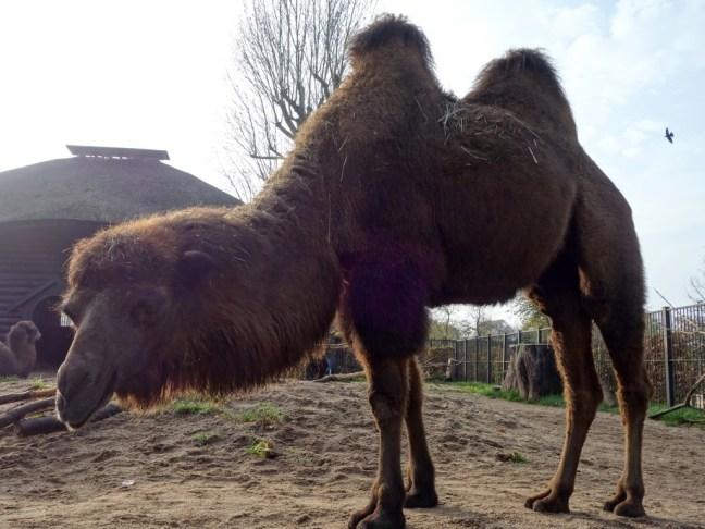 tache de rousseur blog voyage copenhague zoo
