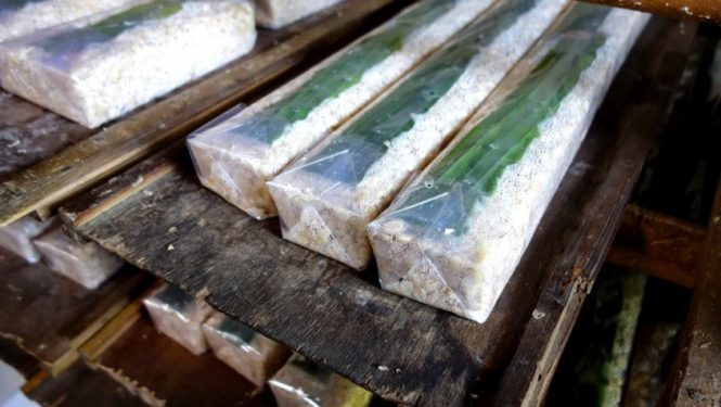 Blog voyage - Indonésie - Java ouest - Environs de Pangandaran et Batu Karas (fabrication de tempeh)