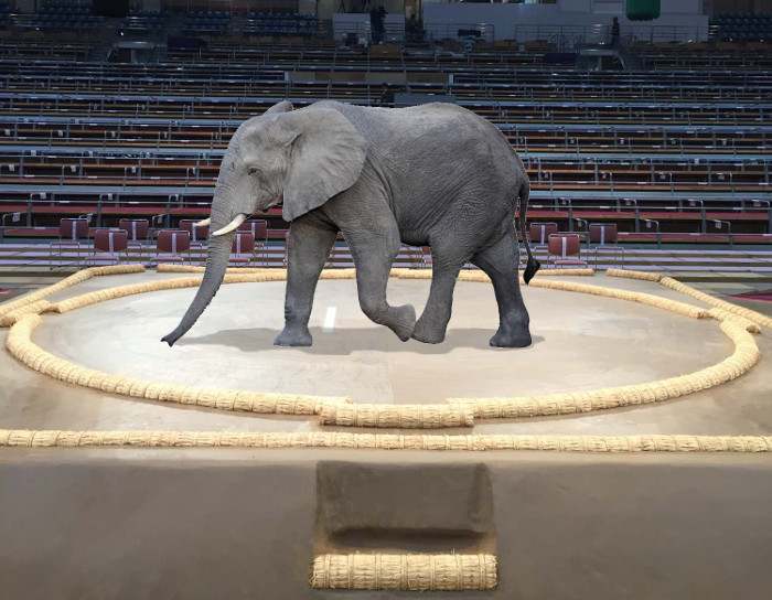 Elephant Crosses Dohyo