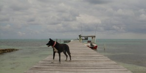 Luna on the dock