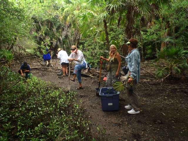 mangrove conservation belize