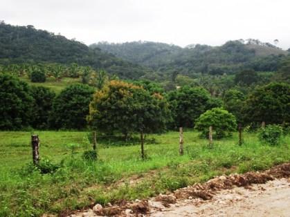 citrus orchards belize farming