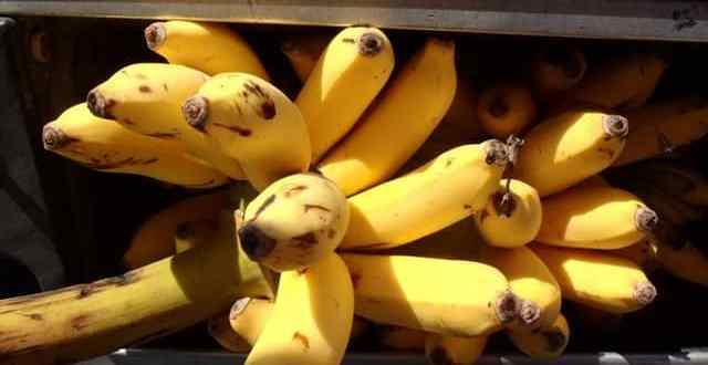 San Pedro Belize Farmers Market and a Mango Story