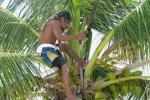 coconut leo climbing a coconut tree