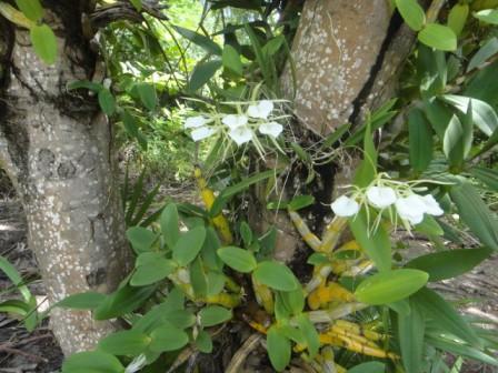belize photos of orchids