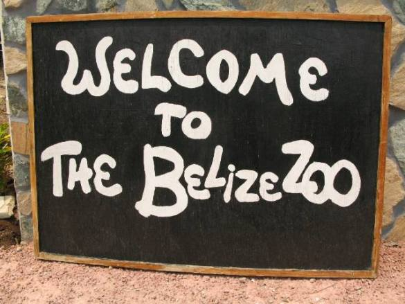 belize zoo tour